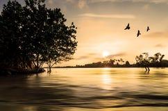 Fågel med solnedgången Royaltyfri Foto