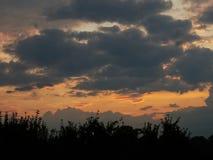 Solnedgång över äpplefruktträdgård Arkivfoto