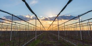 Solnedgång över äpplefruktträdgården i tidig vår arkivfoto
