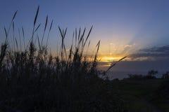 Solnedgång över bambuskott Arkivfoto