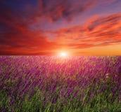 Solnedgång över blommaäng Royaltyfria Bilder