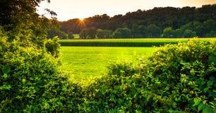 Solnedgång över buskar och ett lantgårdfält i sydliga York County, PA royaltyfri bild