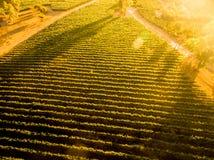 Solnedgång över chilensk vingård Landskap flyg- sikt royaltyfria foton