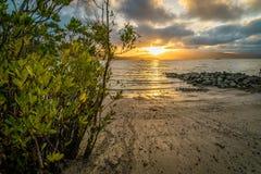 Solnedgång över den Airlie stranden i Queensland, Australien fotografering för bildbyråer