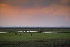 Solnedgång över den Gorongosa nationalparken Royaltyfria Foton