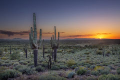 Solnedgång över den Phoenix dalen i Arizona Fotografering för Bildbyråer