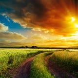 Solnedgång över den slingriga vägen i fält Royaltyfri Bild