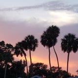 Solnedgång över den svarta höken royaltyfri bild