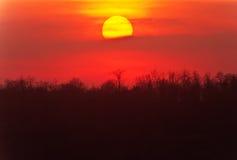 Solnedgång över den wild skogen Fotografering för Bildbyråer
