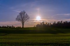 Solnedgång över det bergiga fältet med det ensamma trädet på horisont Arkivbilder