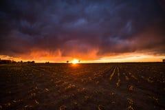 Solnedgång över det jordbruks- gröna fältet - Augusti 2016 - Italien, Bolo Royaltyfri Foto
