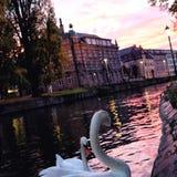 Solnedgång över det Petite France området i Strasbourg, Tyskland fotografering för bildbyråer