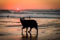 solnedgång över det Stillahavs-  Arkivbild