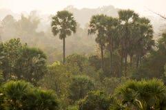 Solnedgång över djungeln Arkivbild
