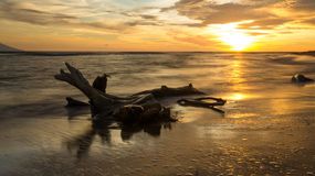 Solnedgång över drivved Royaltyfria Bilder