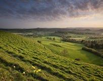 Solnedgång över engelsk bygd i Dorset Arkivbild