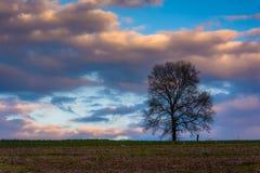 Solnedgång över ett ensamt träd i ett lantgårdfält i lantliga York County, Pe Arkivbild