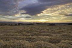 Solnedgång över ett nytt skördat vetefält Arkivbild