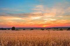 Solnedgång över ett sädes- fält Arkivbilder
