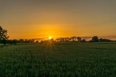 Solnedgång över ett sädes- fält med träd Royaltyfri Foto