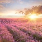 Solnedgång över ett sommarlavendelfält Arkivbild