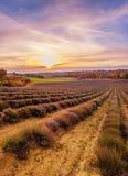 Solnedgång över fält Royaltyfria Bilder