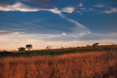 Solnedgång över fältet med konturn av fågeln på en horisont royaltyfri bild
