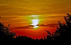 Solnedgång över gåsliten vikskogen Royaltyfri Foto