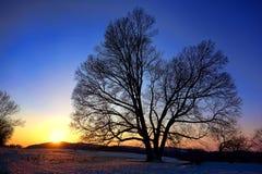 Solnedgång över gammalt träd på dalsmedjanationalparken Arkivbilder