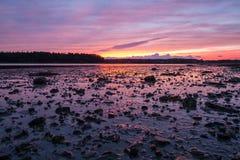 Solnedgång över gyttjiga landremsor i Maine royaltyfria bilder