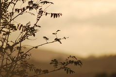 Solnedgång över härligt ensamt träd Royaltyfri Foto