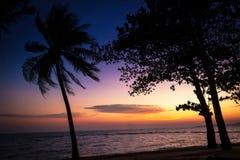 Solnedgång över havet med trädkonturn Arkivbilder