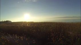 Solnedgång över laken lager videofilmer