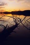 Solnedgång över laken med treen Arkivbilder