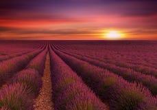Solnedgång över lavendelfält Royaltyfria Foton