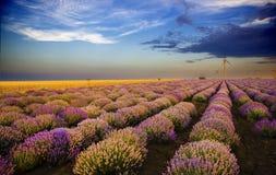 Solnedgång över lavendelfält med vindturbinen Fotografering för Bildbyråer
