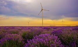 Solnedgång över lavendelfält med vindturbinen Royaltyfri Bild