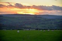 Solnedgång över maximal områdesjordbruksmark Arkivbilder