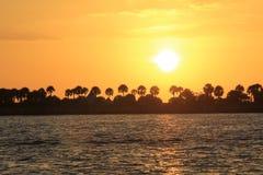 Solnedgång över palmträden arkivbild
