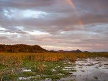 Solnedgång över Palo Verde National Park i Costa Rica Arkivbild