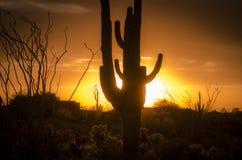 Solnedgång över Phoenix, Az med kaktusträdet Royaltyfri Foto