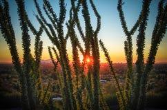 Solnedgång över Phoenix, Az med kaktustreen Royaltyfri Fotografi