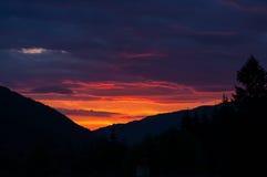 Solnedgång över pinjeskog Fotografering för Bildbyråer