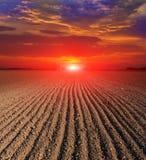 Solnedgång över pluggat fält Fotografering för Bildbyråer