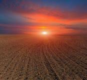 Solnedgång över pluggat fält Royaltyfri Fotografi