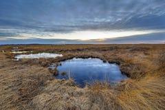 Solnedgång över Rehdener Geestmoor arkivbild