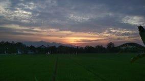 Solnedgång över Ricefield Arkivbild