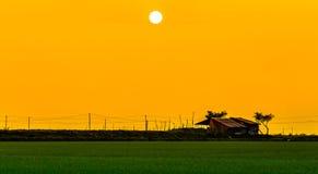 Solnedgång över Ris-HUD Royaltyfri Bild