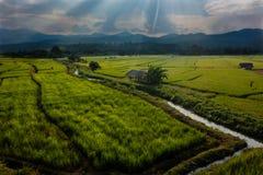 Solnedgång över risfälten i Thailand Arkivbilder