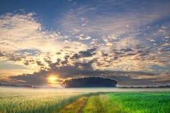 Solnedgång över sädes- fält i sommar Royaltyfri Fotografi